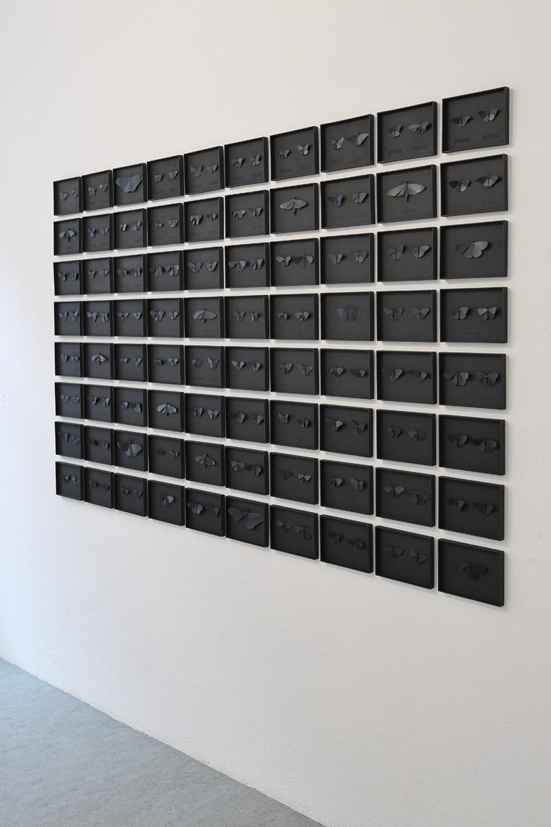 Galerie Löhrl - Lepidoptera