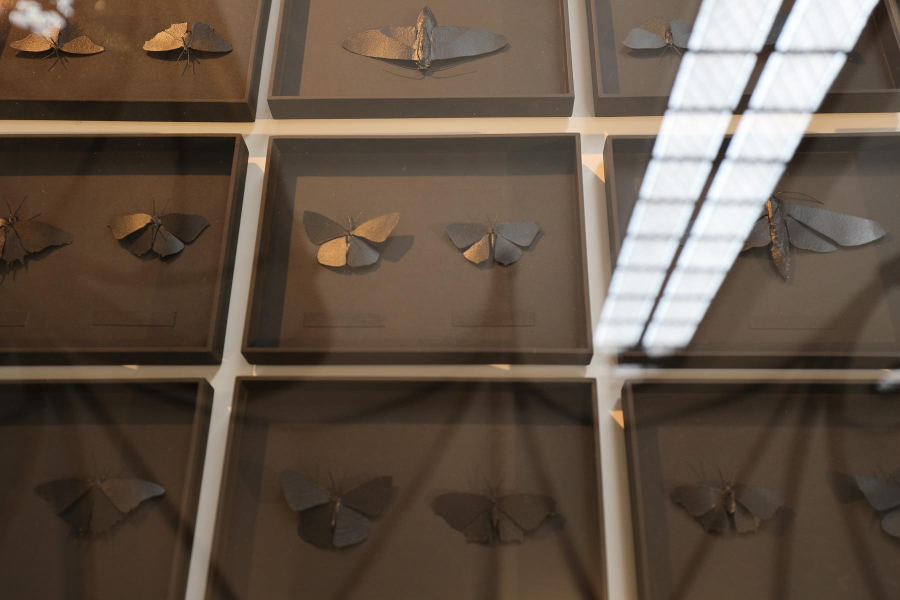 Auralia | achtmal alte brüderkirche | Lepidoptera